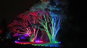 tree lights at the morton arboretum lightswitch illumination lets there be a little more light