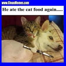 Good Cat Meme - good again clean memes