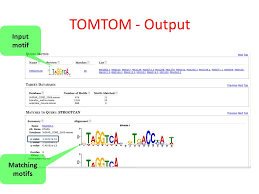 Meme Motif - motif discovery and protein databases tutorial ppt download
