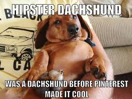 Hipster Dog Meme - hipster dachshund was a dachshund before pinterest made it cool