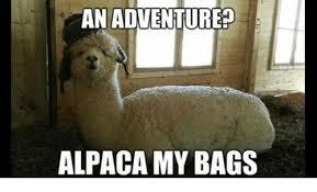 Alpaca Sheep Meme - an adventure alpaca my bags meme on me me