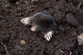 whack a mole home version my happy