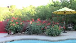 ese small backyard landscaping ideas marissa kay home image with