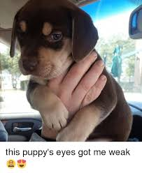 Puppy Eyes Meme - 25 best memes about puppy eyes puppy eyes memes