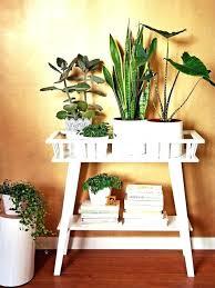 decorative indoor plants decoration indoor plants for decoration