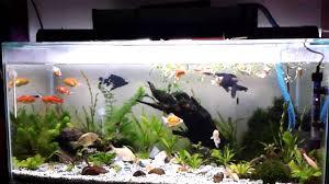 membuat aquascape bening aquarium 1 meter x 40 cm youtube