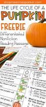 13786 best kindergarten first and second grade teaching ideas