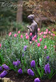 Spring Flower Garden 89 Best Bulbs Images On Pinterest Flowers Spring Bulbs And
