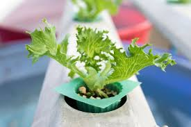 plants to grow indoors parameters to accelerate plant growth for indoor growing emerald