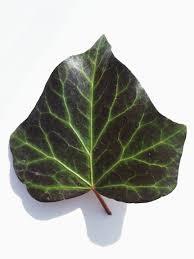 the last leaf literawiki fandom powered by wikia