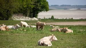 chambre agriculture franche comté l europe veut baisser les aides de la pac les agriculteurs