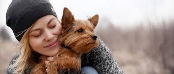 Comfort Pet Certification Can I Get My Emotional Support Animal Certification Online Esa