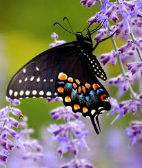 butterfly meaning in symbolism