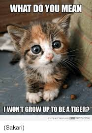 Cute Kitty Memes - 25 best memes about cute kittens cute kittens memes