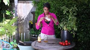 how to get rid of flies in a potted tomato plant the chef u0027s
