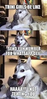 Trini Memes - bad pun dog meme imgflip