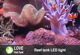 led lights for coral tanks best led lights for coral reef aquariums reviews buying guide