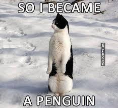 Meme Penguin - funny cat became penguin funny meme bajiroo com