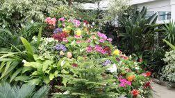flowers spring glicinia flowers wisteria garden colourful flower