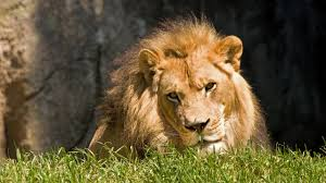 free wildlife wallpapers high quality photos wildlife in