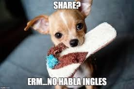 Chihuahua Meme - the chihuahua world s most sassiest dog certapet