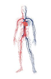 Human Anatomy And Body Systems Human Body Systems Male And Female Version Skillscommons