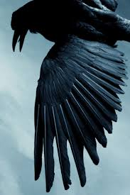 devil z vs blackbird best 25 blackbird ideas on pinterest crows ravens black