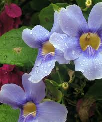 purple and blue flowers 18 beautiful macro photos capturing springtime in israel from
