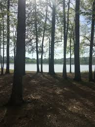 sportsman lake park cullman al christmas lights sportsman lake park cullman 2018 all you need to know before you