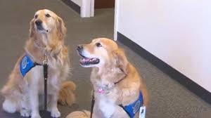 Comfort Retrievers Comfort Dogs Return From Vegas Ozarksfirst