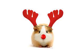 wishing everyone a festive season