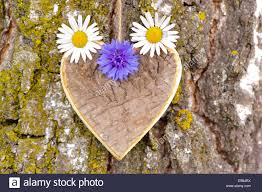 wooden carved heart with flowers at tree bark as symbol for love