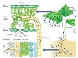High Heat Plants Why Do Plants Sweat Quora