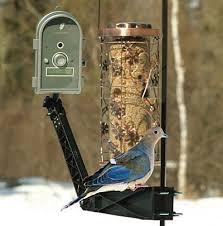 Backyard Wild Birds by 256 Best Backyard Birds Images On Pinterest Backyard Birds For