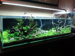 10 gallon planted tank led lighting nature style 10 gallon planted tank google search aquariums