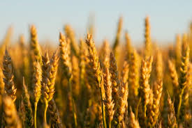 parable of the sower identity fulfilled