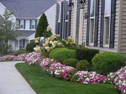flower bushes for front of house 17 low maintenance plants and