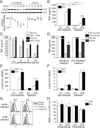 glucocorticoid induced leucine zipper a critical factor in
