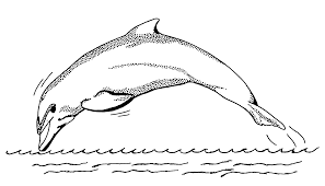 file dolphin 1 psf png wikimedia commons