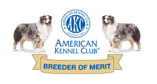 australian shepherd kennel club hof cedarwoods aussies