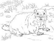 Groundhogs Coloring Pages Free Coloring Pages Groundhog Color Page