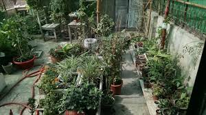 kitchen garden overview garden in home ideas may 2017