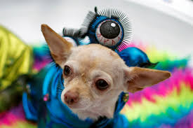 it u0027s howl o ween dogs of new york flaunt costumes in 26th annual