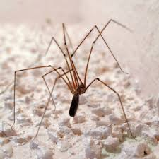 Are Spiders Attracted To Light Common House Spiders U2013 Everything You Need To Know Pest Strategies