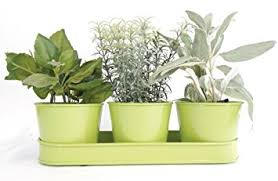 indoor windowsill planter amazon com windowsill planter indoor green galvanized metal