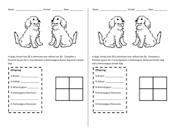 punnett square warm up by chemis tree teaching resources tes