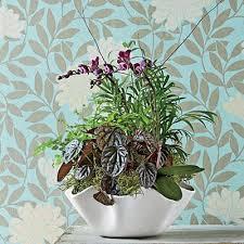 Indoor Garden Containers - 256 best indoor gardens images on pinterest indoor plants and