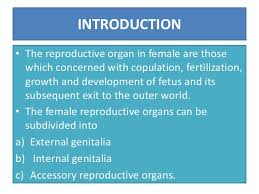 Anatomy Of Reproductive System Female Anatomy Of Female Reproductive Organs