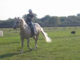 Black Mustang Ranch Pilot Point Texas Horseback Riding Lessons In Pilot Point Tx Riding Instructors