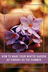 to make your winter garden as vibrant as the summer